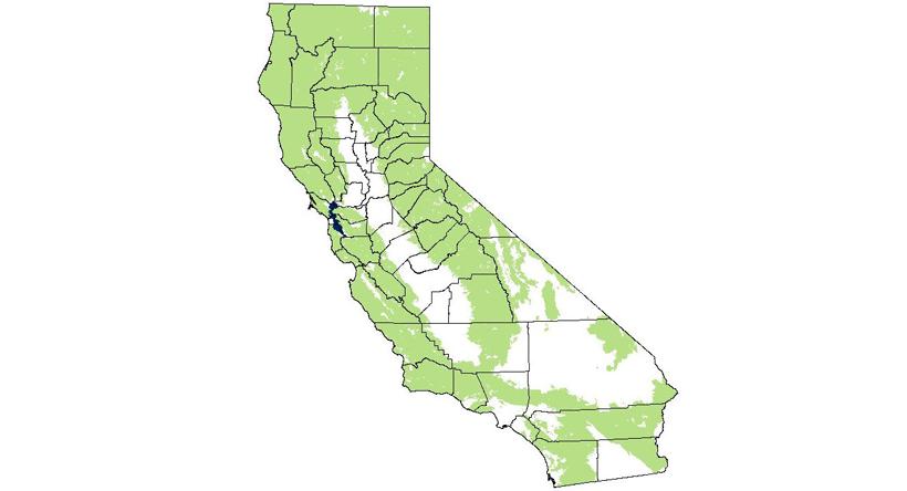 California mountain lion distribution