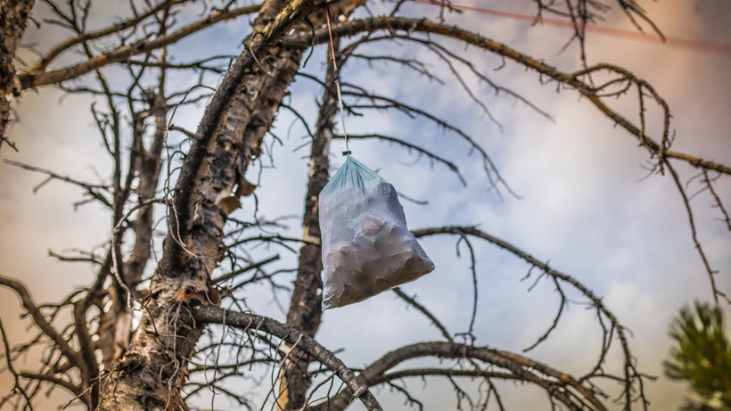 Camping food hung in tree away from bears