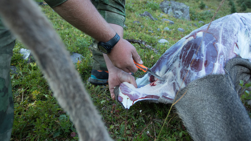 Caping a mule deer with a Havalon Piranta replaceable blade knife