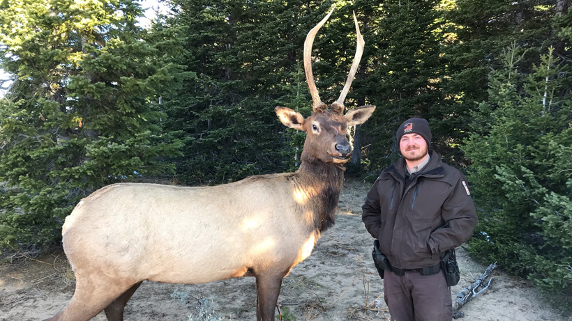 Chad Bettridge elk decoy