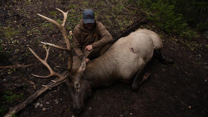 Chris Neville archery elk taken off a wallow