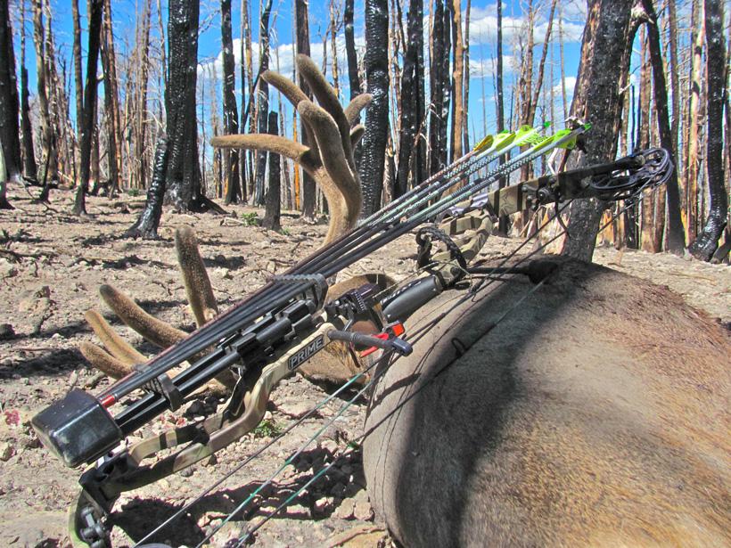 Clint Wirick archery mule deer buck