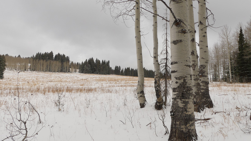 Cold temperatures and snow elk hunting