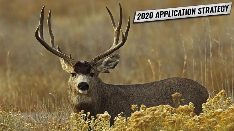 APPLICATION STRATEGY 2020: COLORADO MULE DEER