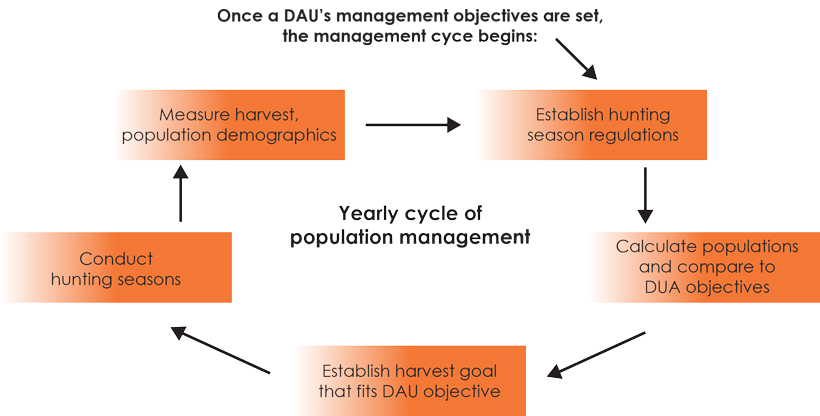 Colorado's management cycle