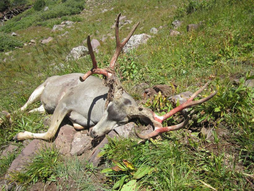Colorado muzzleloader mule deer