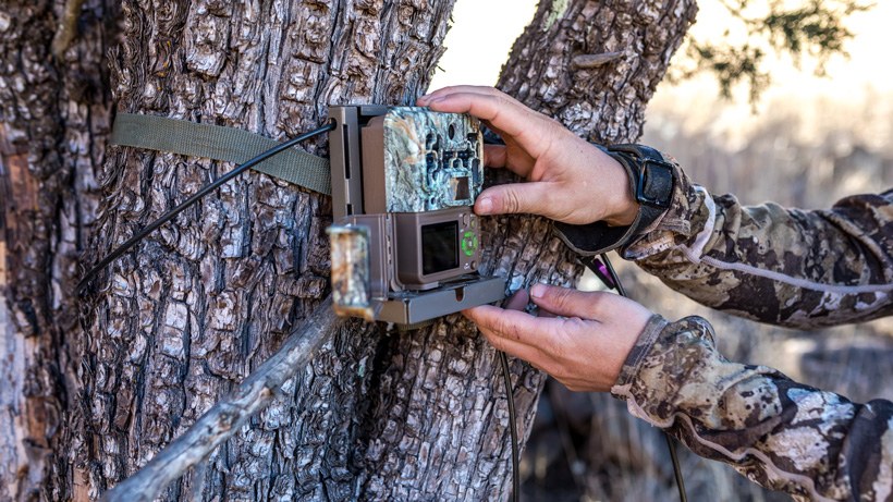 Common mistakes when setting up trail cameras