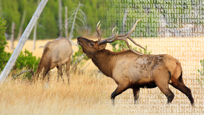 Cost to apply for hunting tags in the west