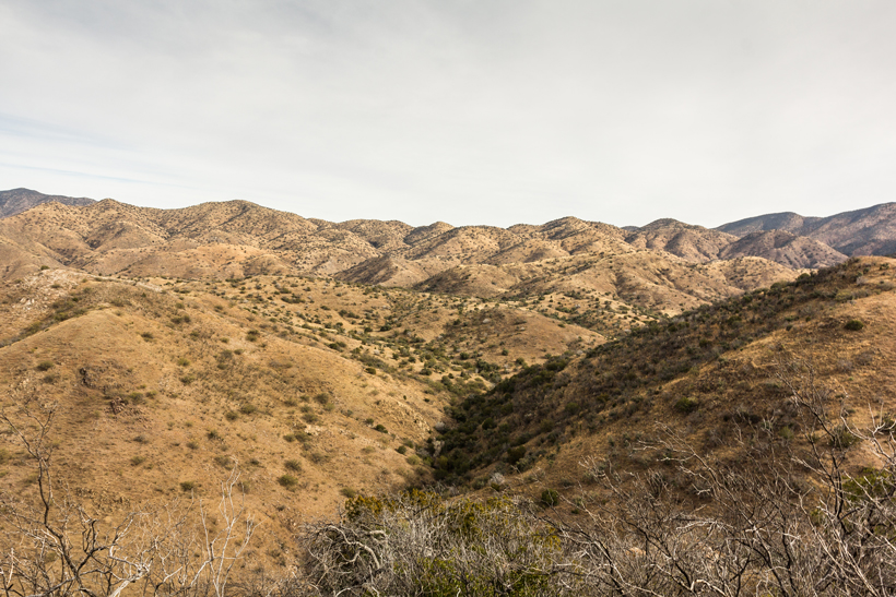Coues deer hunting terrain