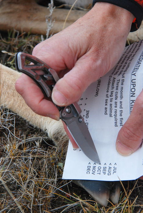 Cutting out Montana antelope tag