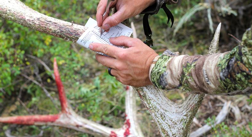 Cutting out archery elk tag