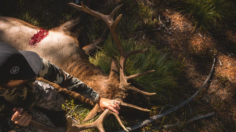 Dan Wilde bull elk