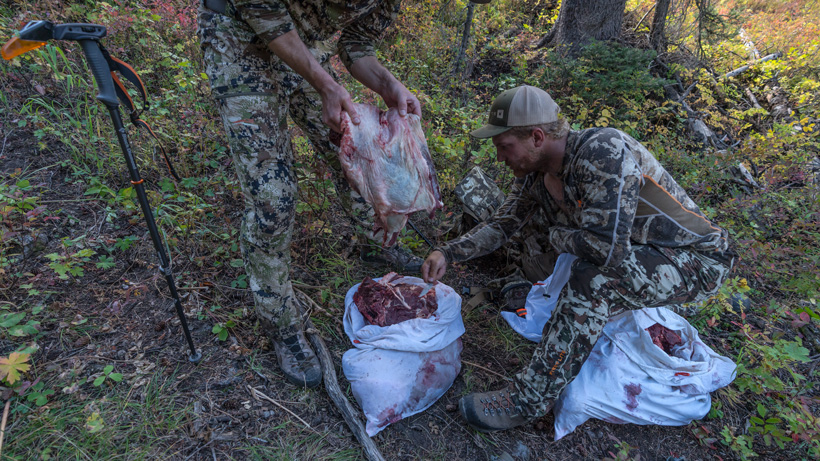 Deboned elk meat in game bags