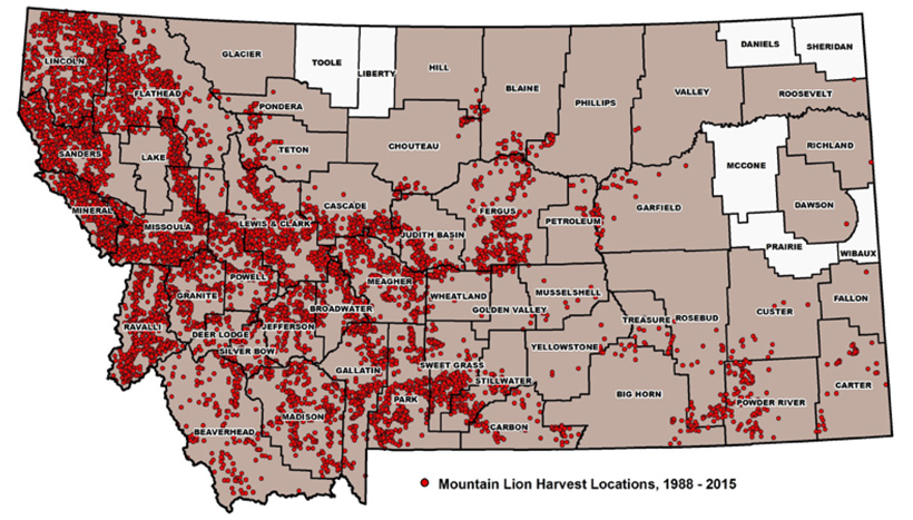 Distribution of Montana mountain lion harvest