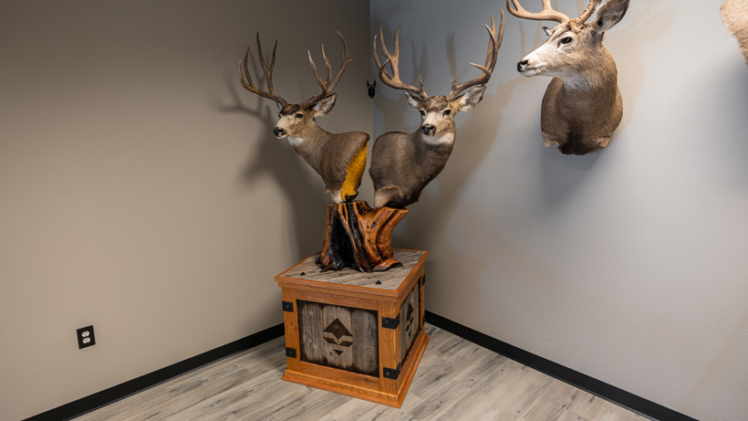 Double mule deer pedestal mount