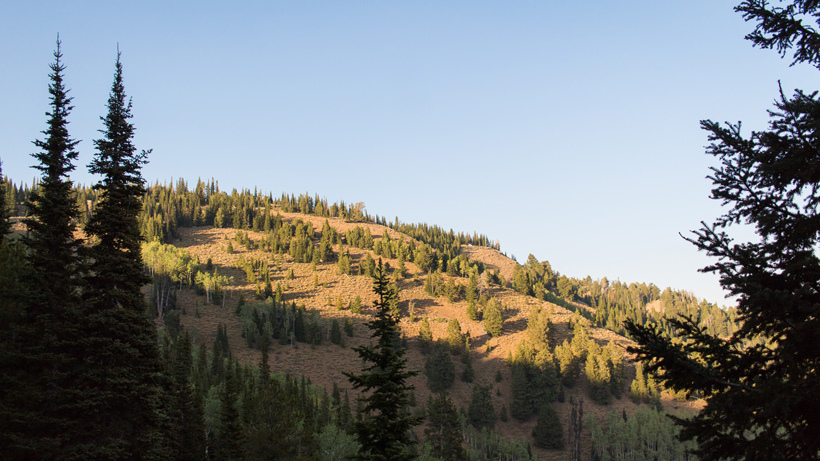 E-scouting with goHUNT Maps for elk