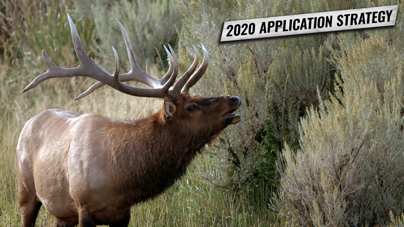 Nevada elk and antelope Application Strategy 2020