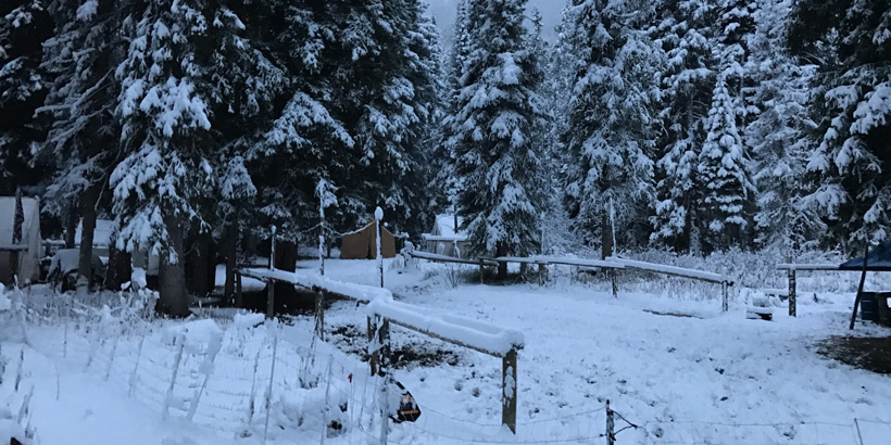 Elk camp with electric fence for grizzly bears