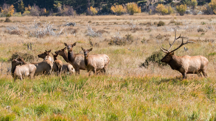 Elk hoof disease confirmed in Yakima herd