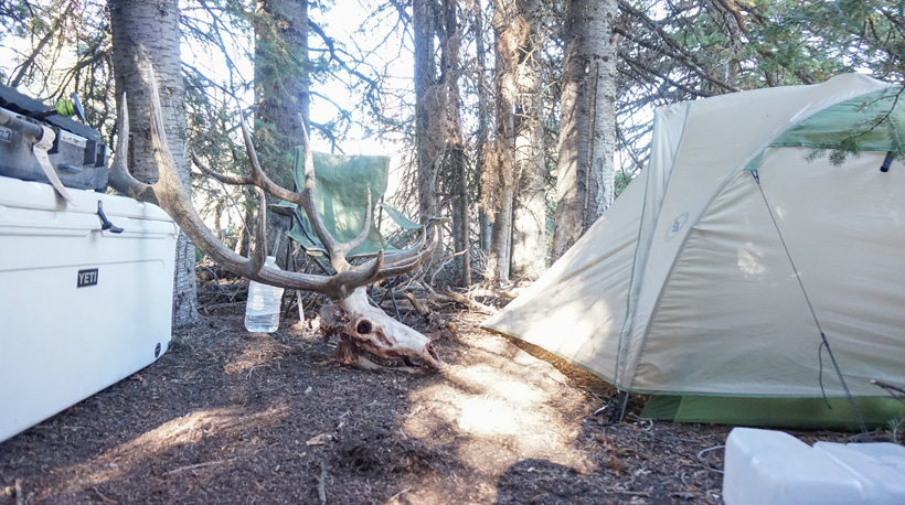 Elk hunting camp