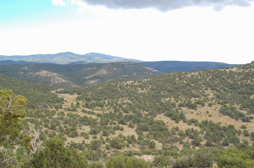 Elk hunting scenery in New Mexico