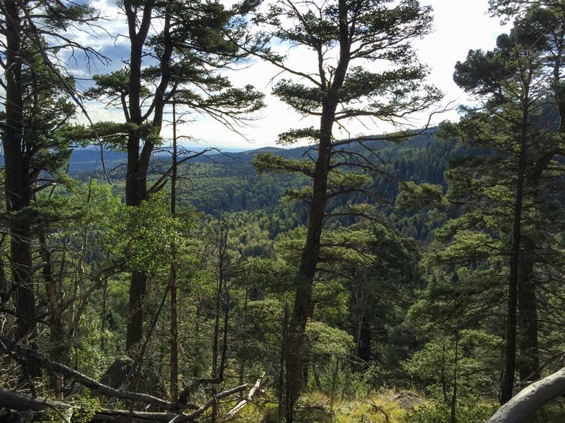 Elk hunting terrain