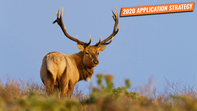 California elk and sheep application strategy 2020