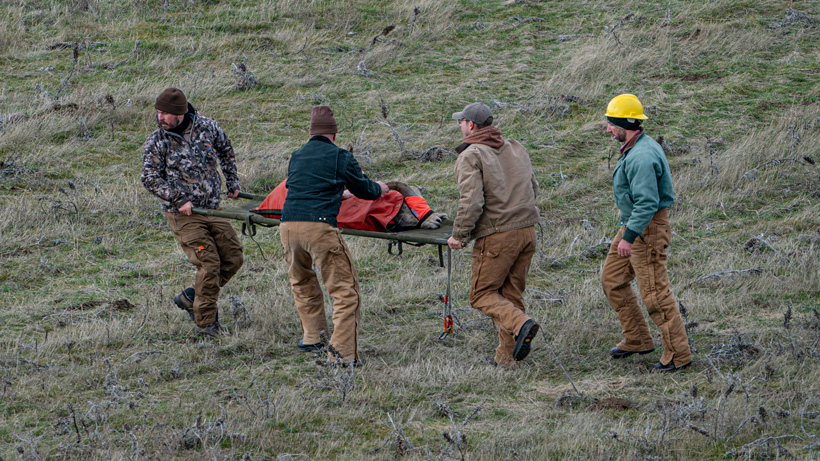 Bighorn sheep in Oregon get tested and many get a new home