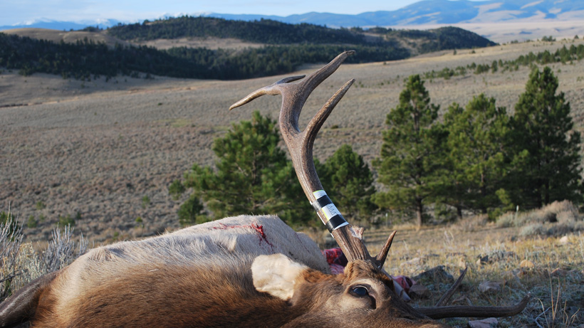 First bull elk for Daniel Smith