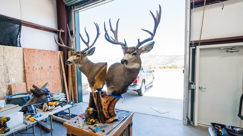 First look at double deer pedestal mount