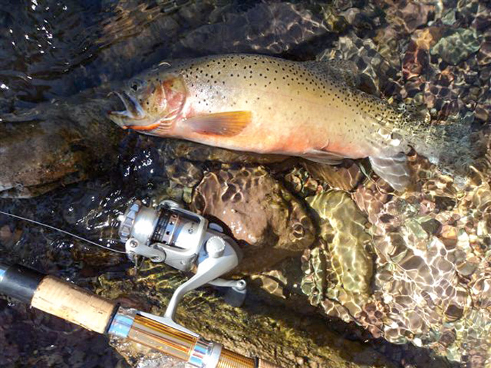 Fishing in Montanas wilderness areas