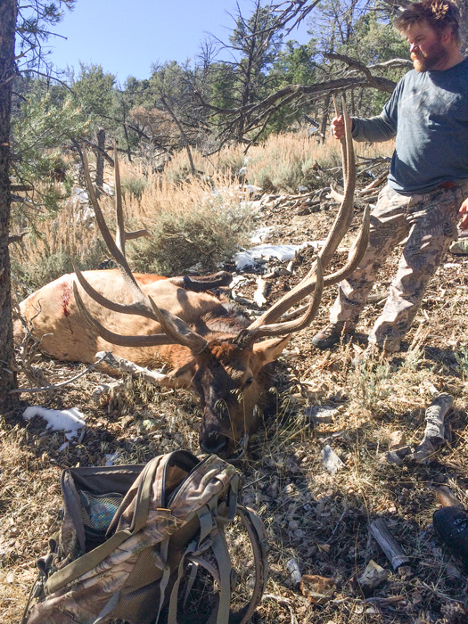 Giant 400 inch Nevada bull elk on the ground