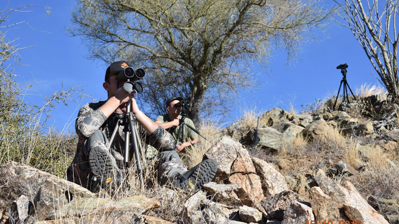 Glassing for Arizona Coues deer