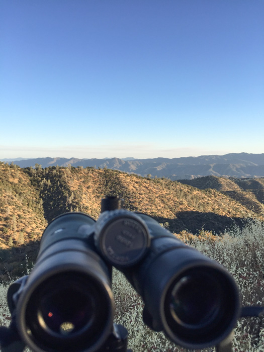 Glassing for California blacktail bucks