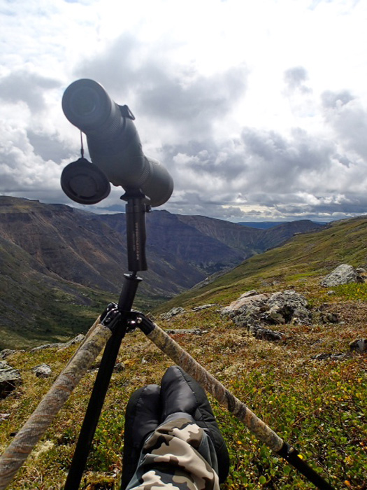 Glassing for Dall sheep