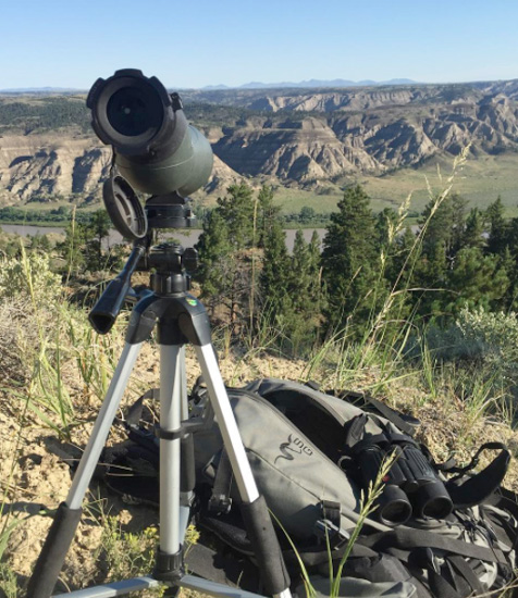 Glassing for Montana bighorn sheep