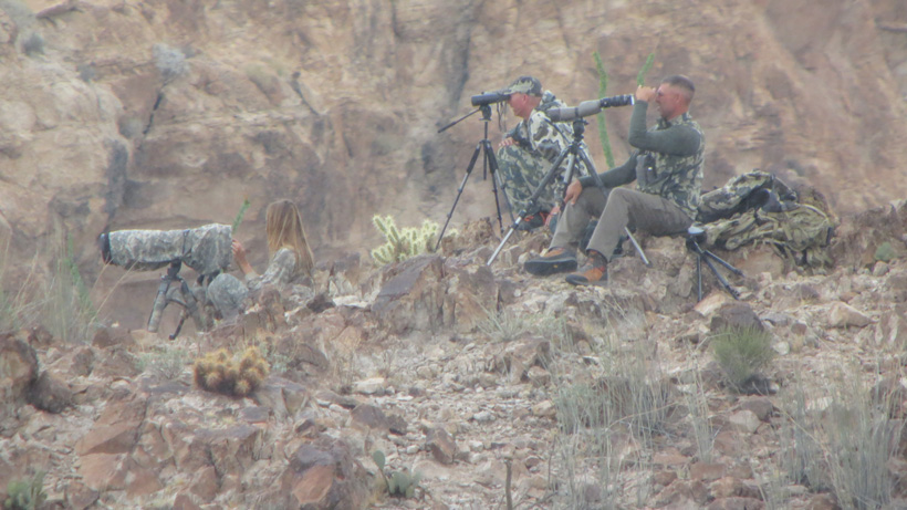 Glassing for desert bighorn sheep