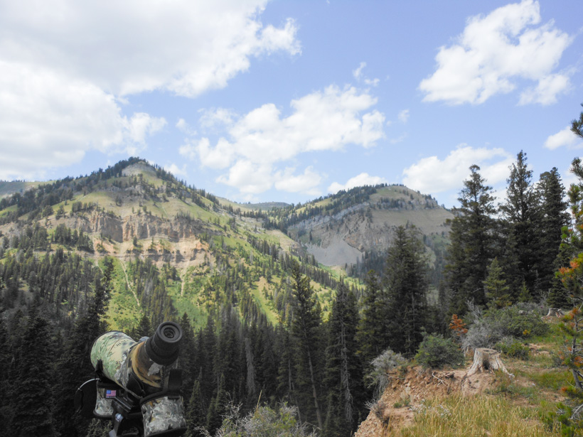 Glassing steep avalanche chutes for mule deer