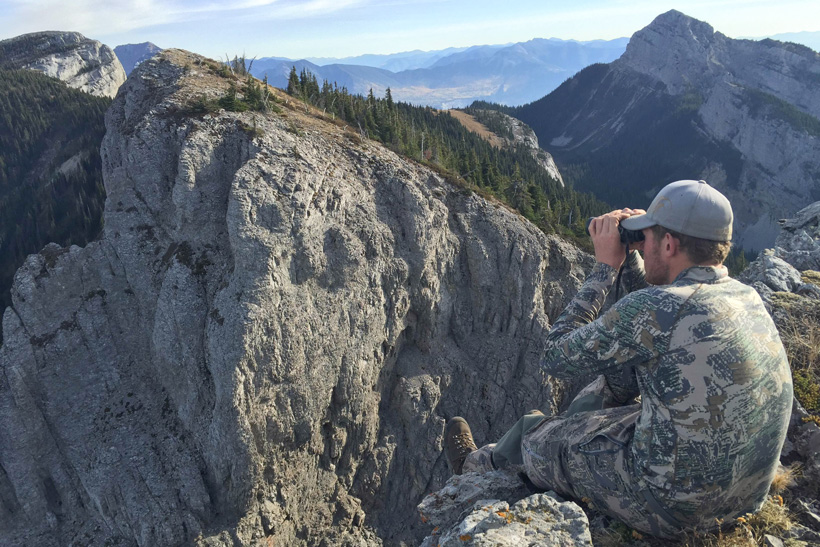 Glassing for rocky mountain bighorn sheep