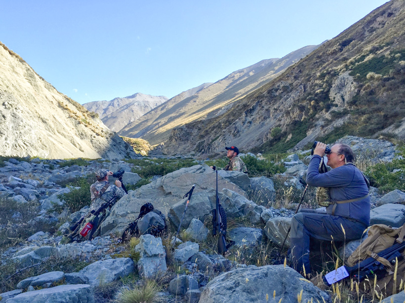 Glassing for tahr in New Zealand