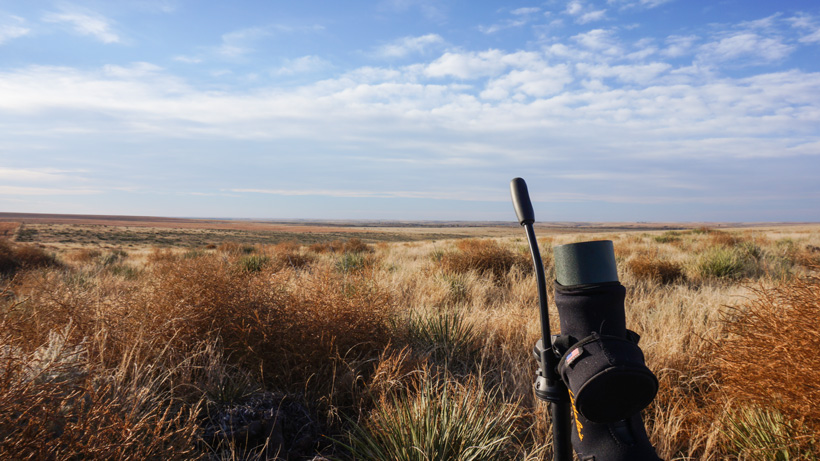 Glassing locations for whitetail and mule deer bucks