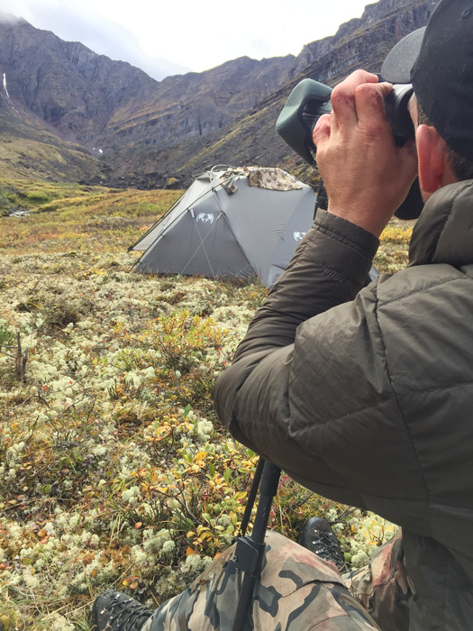 Glassing up Dall sheep from camp