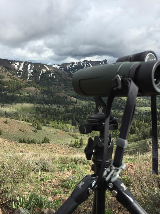Glassing with Vortex binoculars on tripod