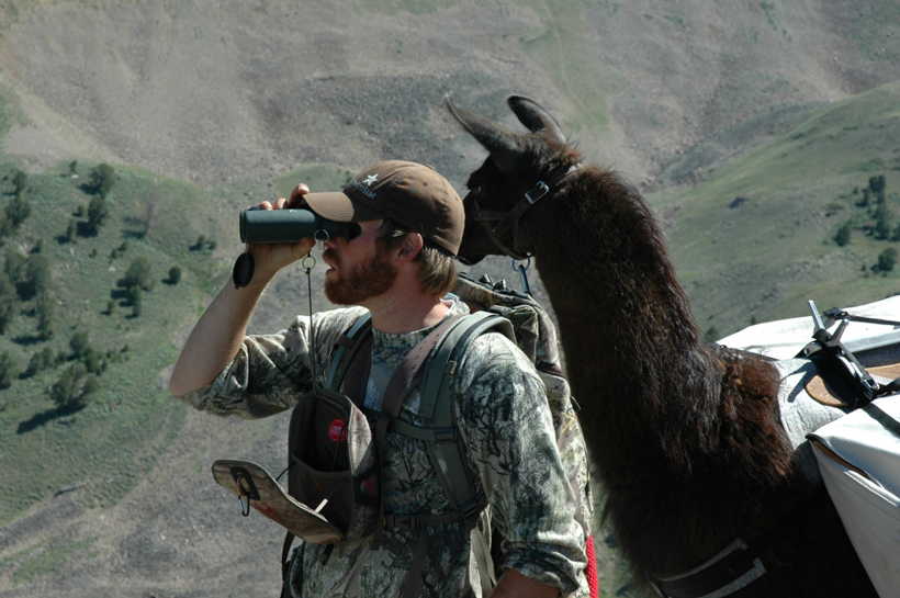 Glassing with a llama