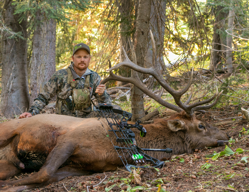 Great archery bull elk