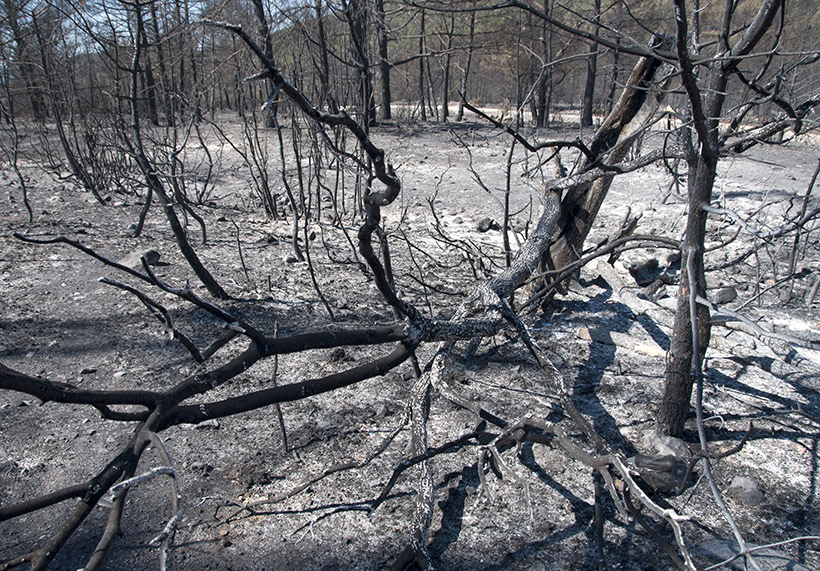 Ground after fire