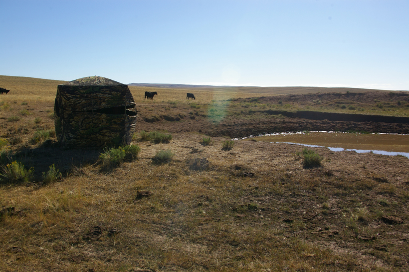Ground blind setup on waterhole