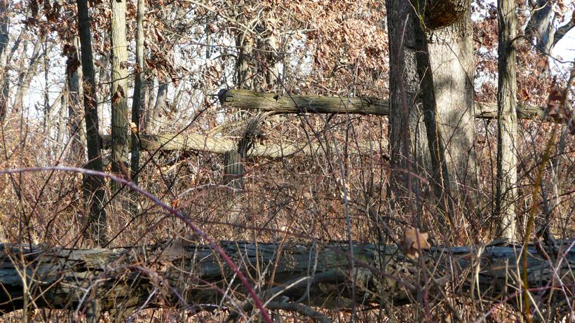 Habitat improvement project in Iowa