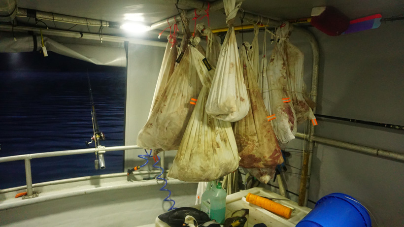 Hanging blacktail deer meat on boat