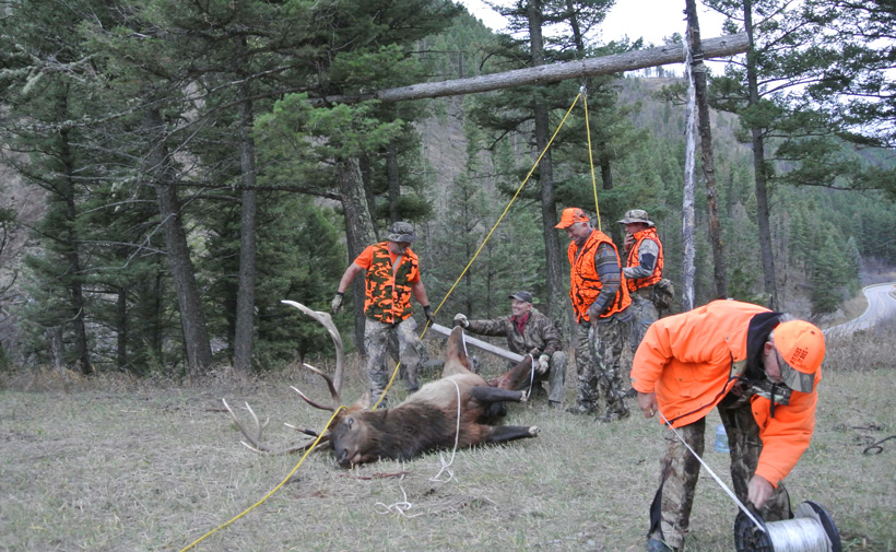 Hanging up Randy's Montana bull elk